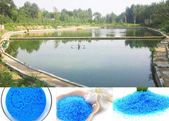 copper sulfate pentahydrate Yosoar (3)